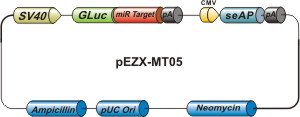 mirna target with luciferase reporter